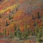 Fall splendor, Yukon