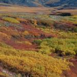 Tundra color, Yukon