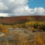 fall magic from Dempster hwy, Yukon